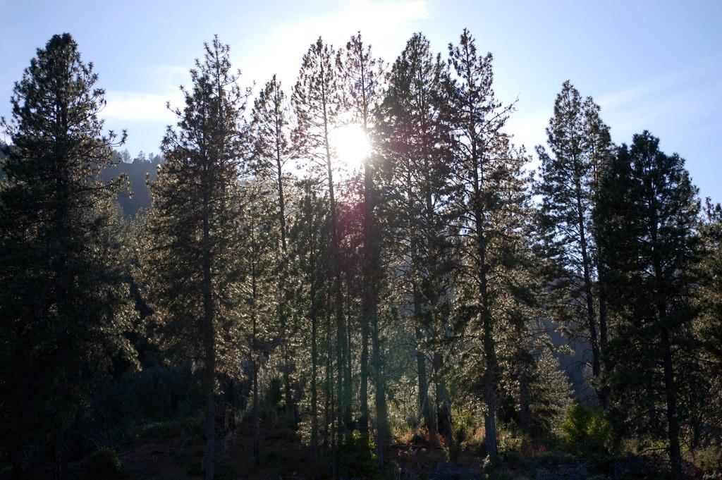 Visiting The RV Campground Shasta Lake