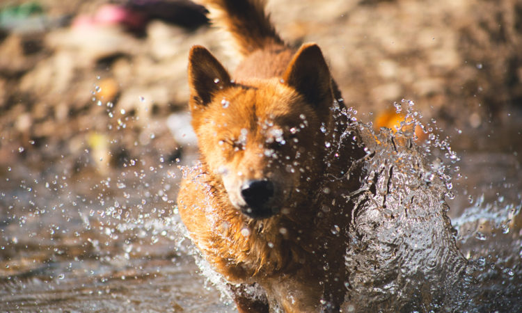 dog plays in water during houseboat vacation