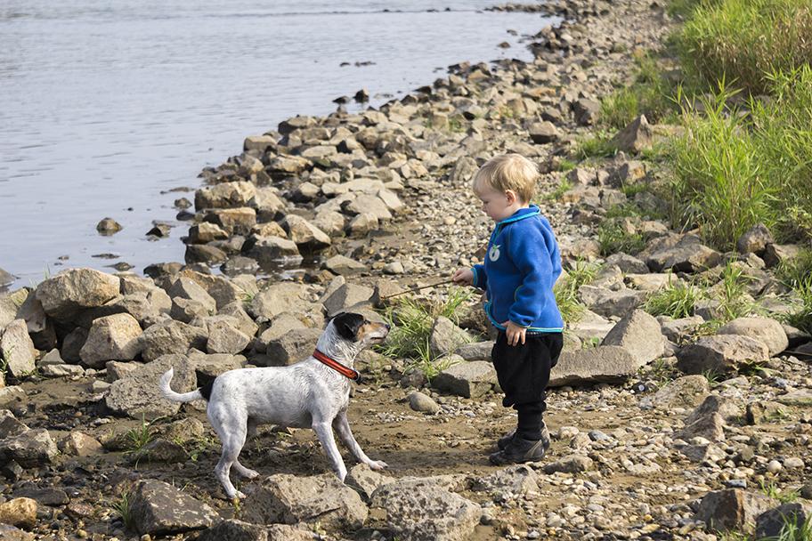 little boy and dog enjoy shasta lake houseboat rentals